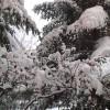 Sarıkamış kar altında