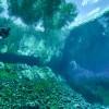 Kadıköy'de dünya denizleri buluşması