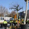 Taksim Meydanı'na 58 ağaç!