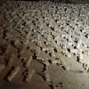 Üsküdar'da gömülü silahlar bulundu