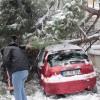 Çam ağacı arabanın üstüne düştü