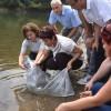İstanbul'daki göletlere 111 bin yavru sazan balığı bırakıldı