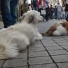 Taksim'de kedi köpek kardeşliği