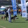 Çekmeköy'de köpekler kıyasıya yarıştı