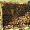 Arı üreticileri İstanbul'da buluşuyor