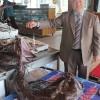Balıkçıların ağına takıldılar…